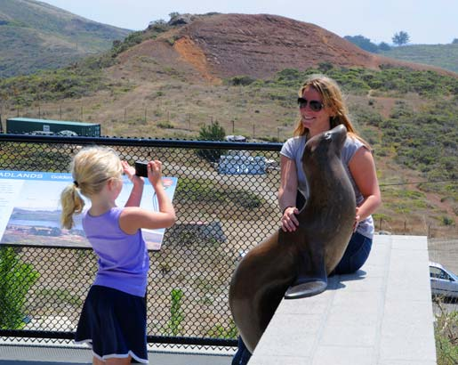 California Sea Lion sculpture being photographed